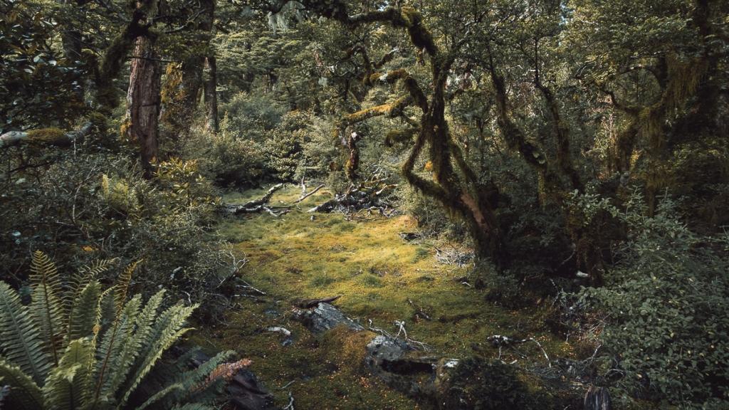 Forêt en Nouvelle Zélande